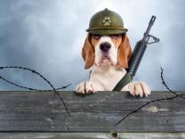 Nevjerovatne priče o psima ratnim herojima